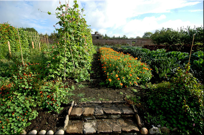 Kitchen Garden steps