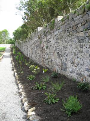 The border along the southeast wall shortly after planting